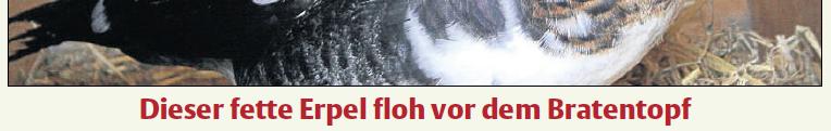 Titelbild der HNA (KS-Mitte) vom 14.12.12